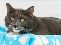 Pelos is a handsome, grey senior fella happy to spend