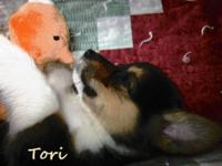Tori is a little sweetheart. She loves playing with