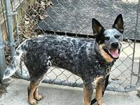 Pending ACD Alice's story Please contact Monica R