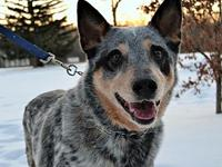 Pending ACD Marlow's story Please contact Monica R