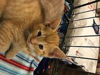 Pending Feline Squash's story Please contact Monica R