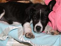 Penelope (Adopt Pending)'s story Penelope is a cute