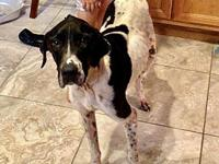 Penelope's story Meet Penelope!  This pointer girl