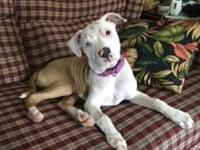 Penelope's story Penelope just joined our rescue and is