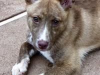 Introducing Penley! Penley is a young female corgi/