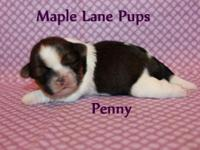 Penny a beautiful Dark Red & White! She has a nicely