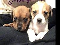 Penny and Piper's story Penny and Piper are two