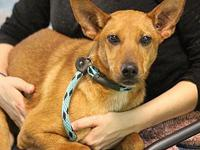 PENNY's story MEET PENNY! An 8 month old, female,