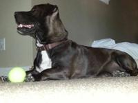 Hi, my name is Penny. I?m a 3-4 year old, black lab and