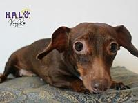 Penny's story ~On the search of a very special home