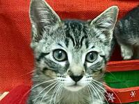 Penny's story Sweet little tabby girl Penny came to