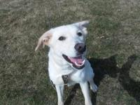 Penny is a 1 year old GSD/Mastiff Mix. She is spayed,