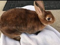 Penny is spayed and would be good as the only bunny.