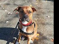 Penny's story Meet Penny... She is about 2 yr old and
