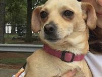 My story Penny is a happy, sweet, friendly, 2 year old,