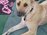Penny's story Penny came to us when her mom was