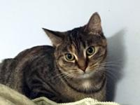 Peony is a sweet and gentle 9 month old brown tabby