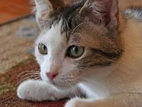 Pepito Male Kitten's story This Is Pepito. He is a