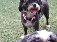 Pepper & Doc's story Adoption fee is $350 for the pair,