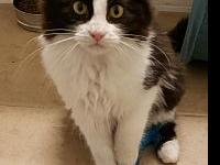Pepper's story * Male Domestic Longhair mix *