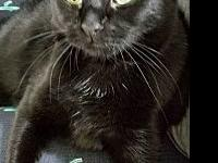 Pepper Female's story Pepper is a gorgeous 2yr old pure