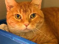 Pepper Jackie's story Primary Color: Red Tabby Weight: