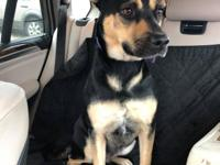 Pepper- 4 year old female Shepherd mix Approx 45 lbs