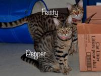 Pepper is a very sweet cat who was a part of a 7-kitten