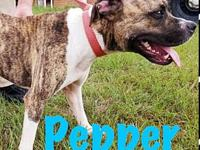 Pepper-URGENT's story We do not euthanize any dogs,