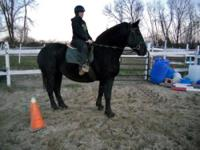Percheron - Bella - Large - Adult - Female - Horse
