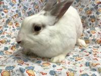 Meet Percy. Hes a handsome bun just waiting for a home