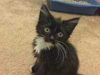 Percy's story Hi! I'm Percy, and I'm a new addition to