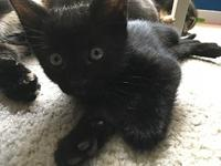 Percy's story Percy is currently in foster care. If you
