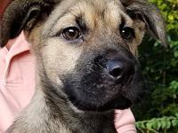 Perdita- FOSTER NEEDED's story Meet Perdita, a 10 week