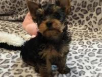 I have 2 very nice female yorkies born September 12th.