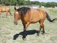 My son is ready to sell his sorrel gelding. He has been