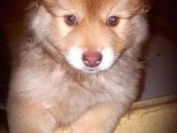 This baby POMSKY is the last bear in the cave, & needs