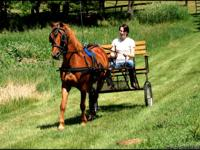 Perfect Pony, no vices, bomb proof, great with kids..