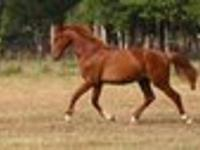 We have a very nice selection of Performance horses for