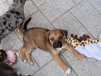 Perisic's story Meet the World Cup Puppies!  These