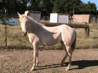 Real nice colt, he is quiet and gentle. Ties, leads,