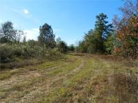 South Houston Timber Tract --||-- Excellent Hunting