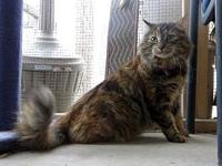Persia's story Persia is a 3 year old female Domestic