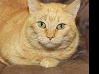Persian - Adele - Medium - Adult - Female - Cat Adele
