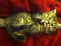 I have two kittens that are ready for their new homes.