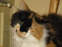 persian cat for sale in Virginia Classifieds & Buy and Sell in