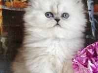 If you choose so, this MAGNETIC Blue Silver Persian