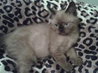 LOVING BEAUTIFUL KITTENS AVAILABLE TO LOVING HOMES. I