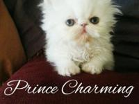 Only Prince Charming is still available!!! Teacup size