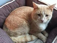 Persimmon - A 4PAWS Cat's story  e-mail 4Paws if